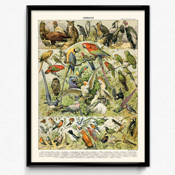 Osta Aviary Bird Vintage Print 1 - Orion Wells
