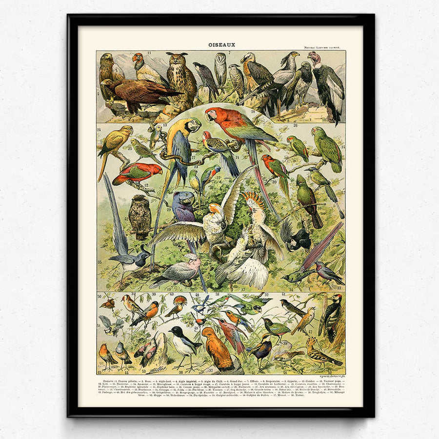 Shop for Aviary Bird Vintage Print 1 - Orion Wells