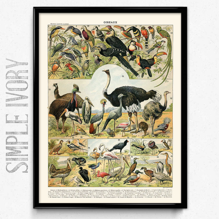 Shop for Aviary Bird Vintage Print 2 - Orion Wells