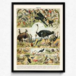 Osta Aviary Bird Vintage Print 2 - Orion Wells