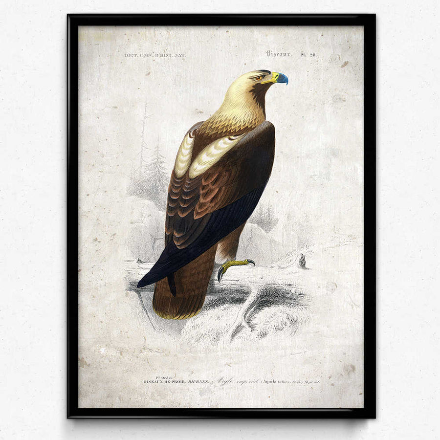 Osta Eagle Vintage Print - Orion Wells