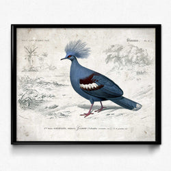Osta Blue Pigeon Vintage Print (VP1074) - Orion Wells