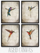 Colibris Lot de 4 tirages vintage - VP1169 - Orion Wells