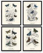 Shop for Butterflies Vintage Print Set of 4 - Blue Butterflies VP1182 - Orion Wells