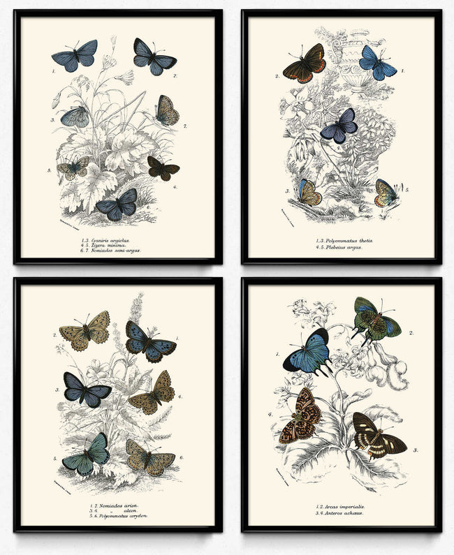 Osta Butterflies Vintage Print Set of 4 - Blue Butterflies VP1182 - Orion Wells