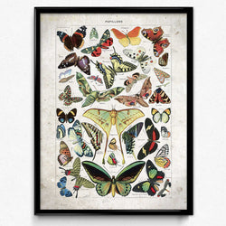 Shop for Butterflies Vintage Print 11 - Larousse (VP1100) - Orion Wells