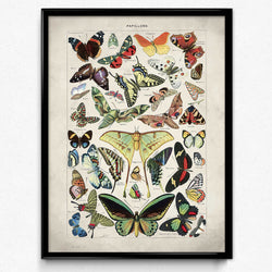 Shop for Butterflies Vintage Print 1 - Larousse - Orion Wells