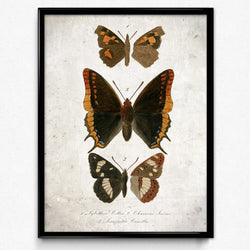 Shop for Butterfly Art Vintage Print 6 for Home Decor - VP1134 - Orion Wells
