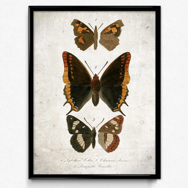 Butterfly Art Vintage Print 6 για διακόσμηση σπιτιού - VP1134 - Orion Wells
