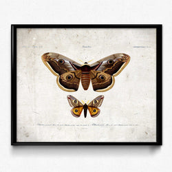 Butterflies Vintage Print 9-Orbigny- Orion Wells