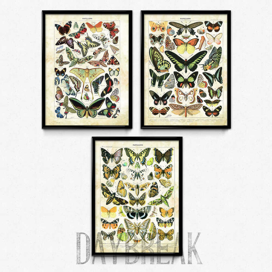 Shop for Butterfly Meadow Set of 3 - Larousse - Orion Wells