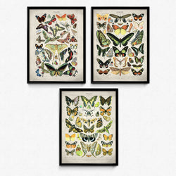 Osta Butterfly Meadow Set of 3 - Larousse - Orion Wells