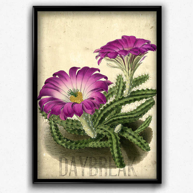Shop for Lady Finger Cactus Botanical Vintage Print - Vintage Botanical Home Decor - Orion Wells