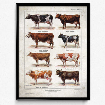 Cow Breeds Vintage Print 1 - VP1056 - Orion Wells