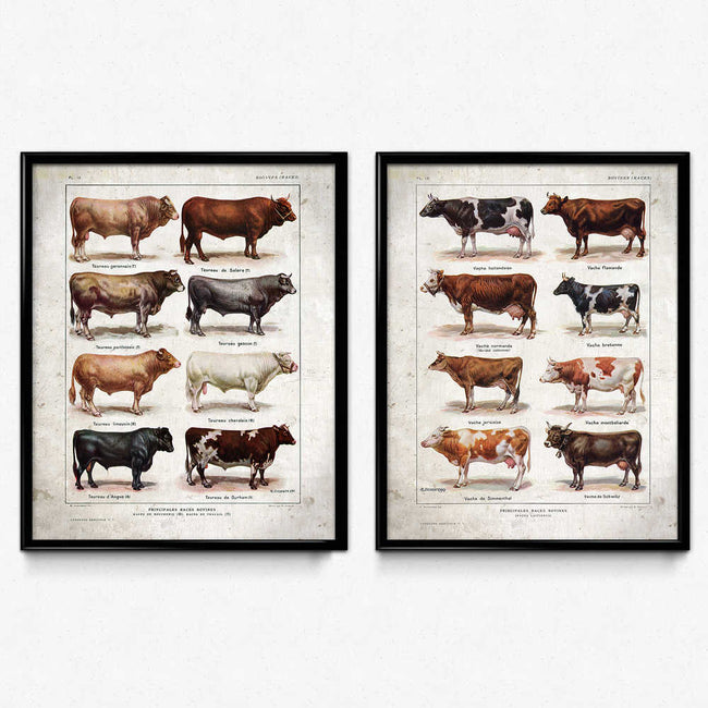 Cows Breeds Vintage Print Set of 2 - VP1058 - Orion Wells