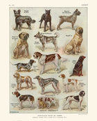 Dogs Breeds Vintage Print 1 (VP1014)-Orion Wells 쇼핑
