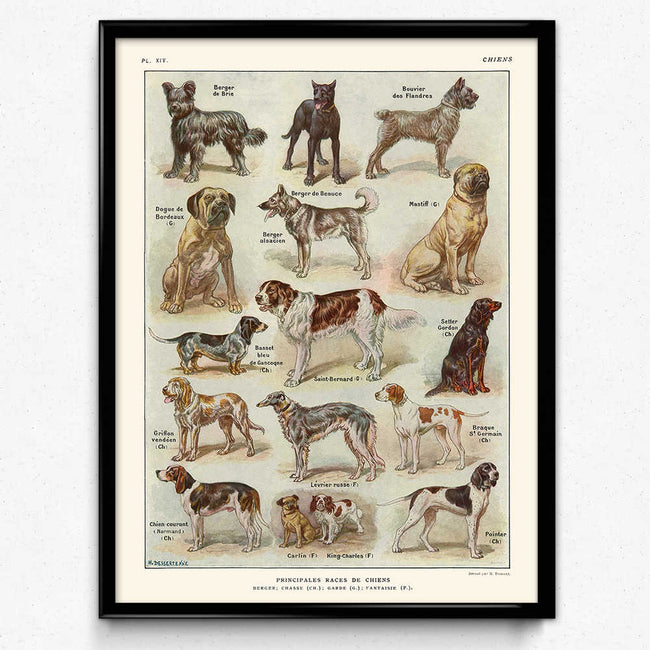 Shop for Dogs Breeds Vintage Print 1 (VP1014) - Orion Wells