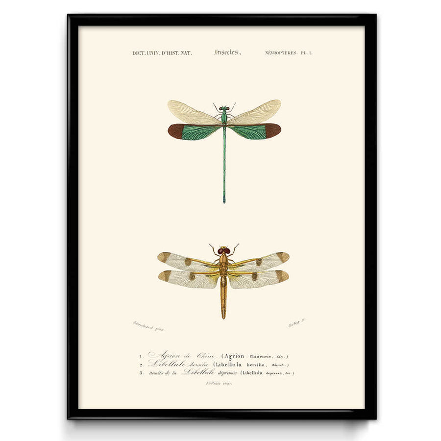 Osta Dragonfly Vintage Print 3 - VP1091 - Orion Wells