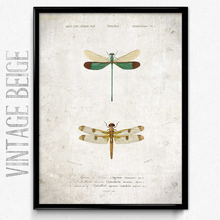 Dragonfly Vintage Print 3 구매-VP1091- Orion Wells