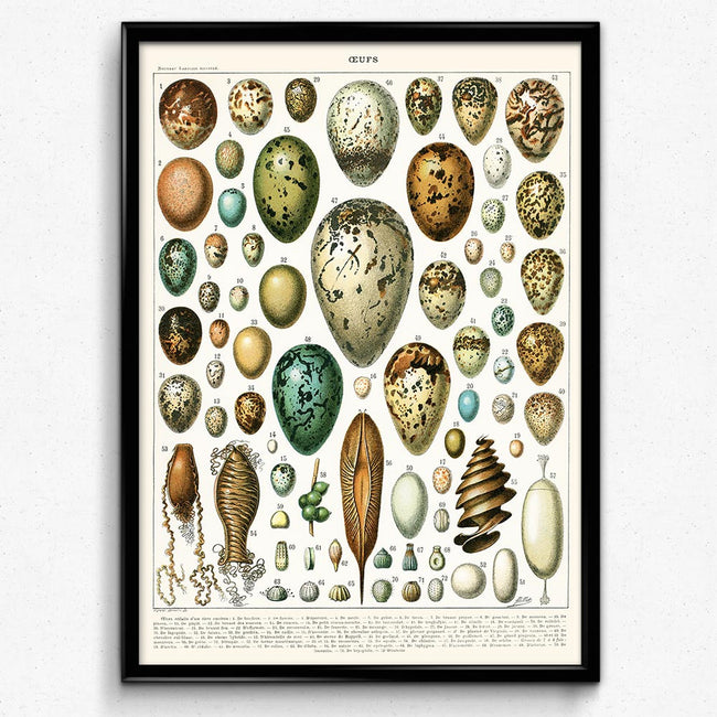 Shop for Egg Vintage Print - Orion Wells