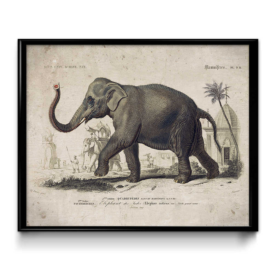 Osta Elephant Vintage Print - VP1083 - Orion Wells