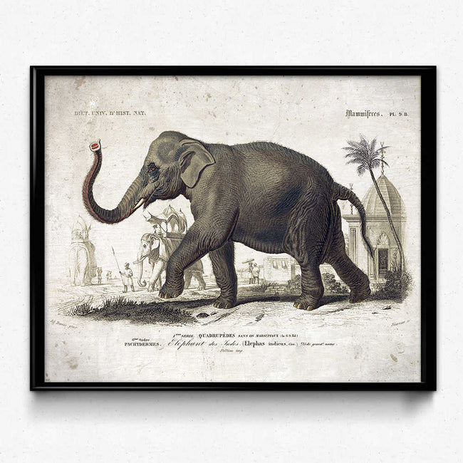 Shop for Elephant Vintage Print - VP1083 - Orion Wells