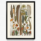 Shop for Feathers Set of 3 Vintage Prints - Orion Wells