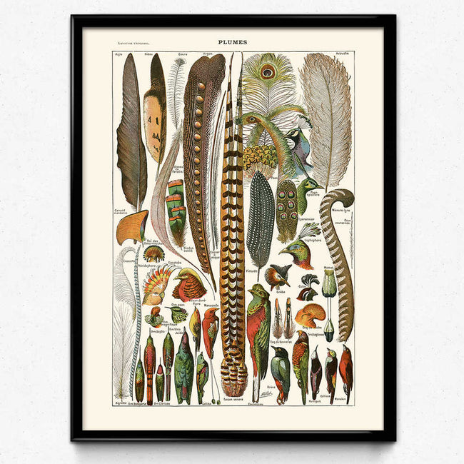 Vintage Feathers Bird Print 2 - Orion Wells