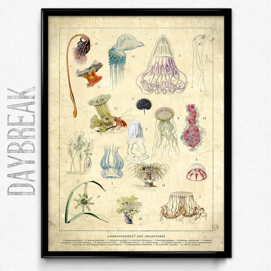 Jellyfish Fish Vintage Print 15 - Orion Wells