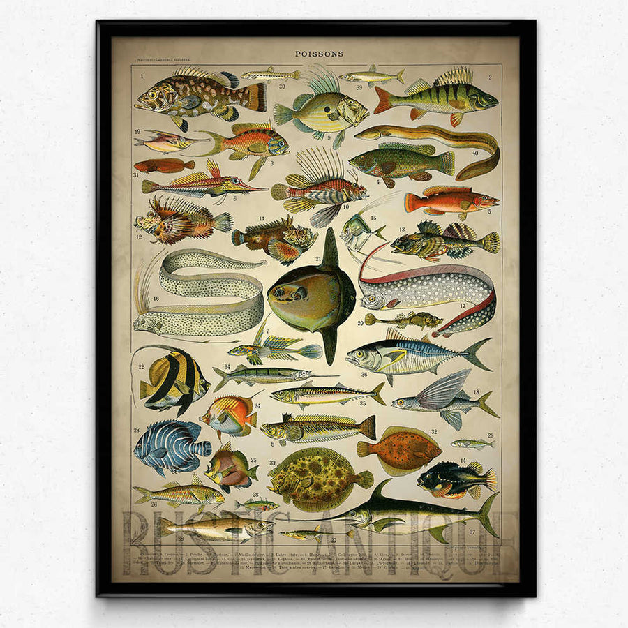 Shop for Saltwater Fish Vintage Print - Orion Wells