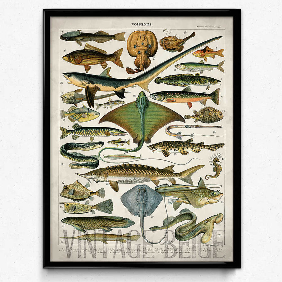 Sharks and Fish Vintage Print - Orion Wells