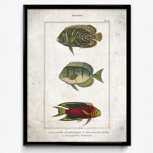Osta Colorful Fish Vintage Print 4 - VP1139 - Orion Wells