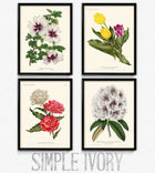 Lot de 4 fleurs Vintage Print - Orion Wells