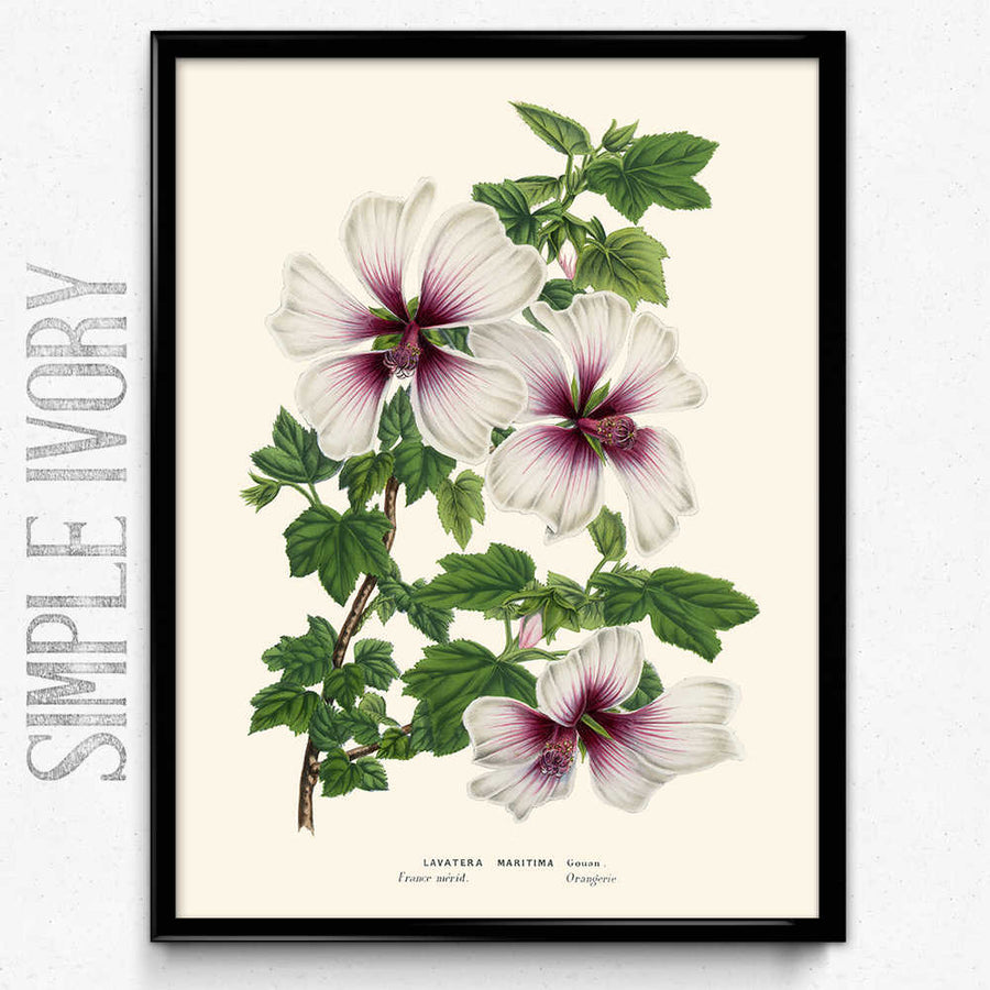 Purple And White Flowers Vintage Print Orion Wells