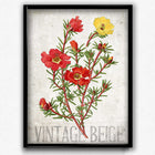 Osta Purslane Red and Yellow Flowers Vintage Print - Orion Wells