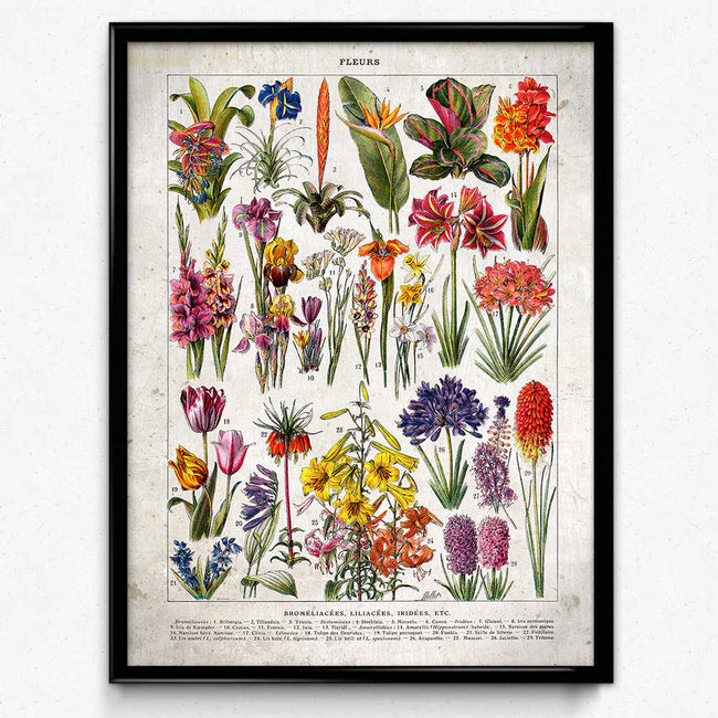 French Flowers Fleurs Vintage Print 5 - Lilacs and Iris - Orion Wells