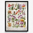 Shop for French Flowers Fleurs Vintage Print 6 - Orchids - Orion Wells