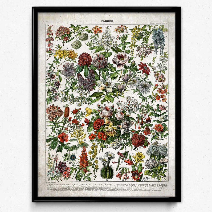 French Flowers Fleurs Vintage Print 1-Orion Wells 쇼핑
