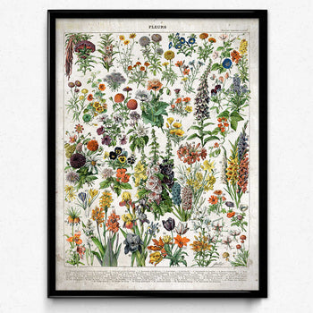 French Flowers Fleurs Vintage Print 3 - Orion Wells