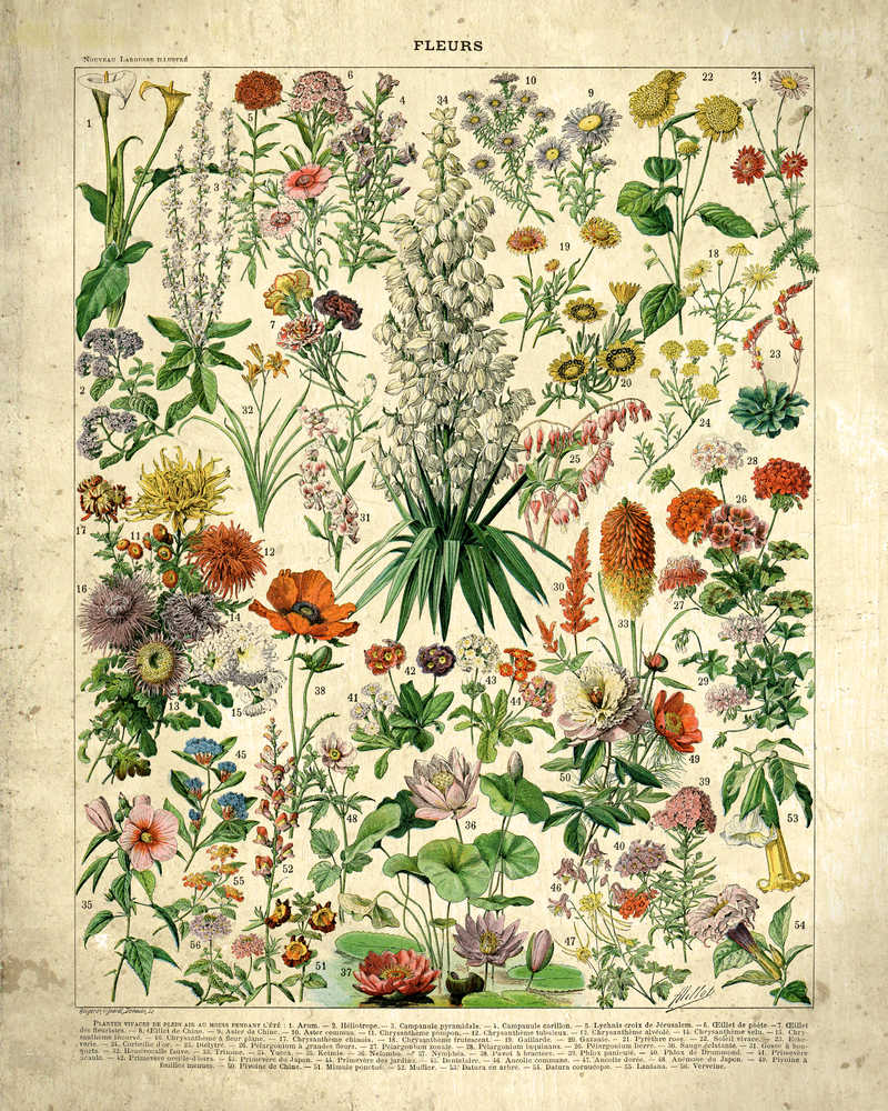 Shop for French Flowers Fleurs Vintage Print 4 - Orion Wells