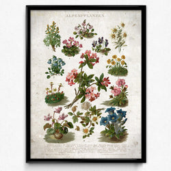 Alps Flowers Vintage Print 3-VP1132-Orion Wells 쇼핑