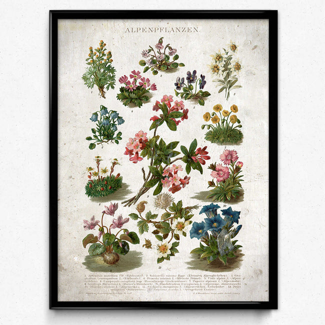 Shop for Alps Flowers Vintage Print 3 - VP1132 - Orion Wells