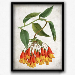 Bomarea Red and Yellow Flowers Vintage Print - Orion Wells