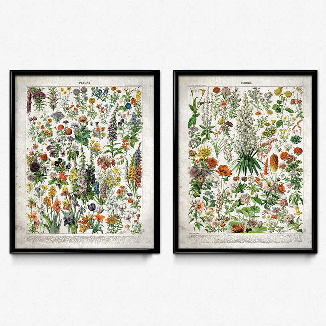 Shop for French Flowers Fleurs Vintage Print Set of 2 - Orion Wells
