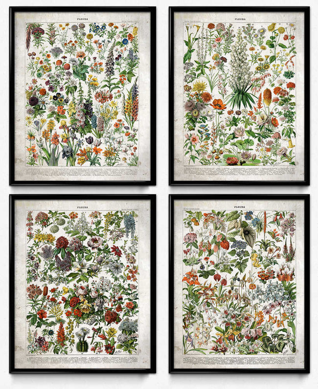 Shop for French Flowers Fleurs Vintage Print Set of 4 - (VP1001) - Orion Wells