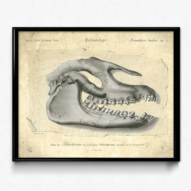Shop for Dinosaur Fossil Vintage Print 1 (VP1007) - Orion Wells