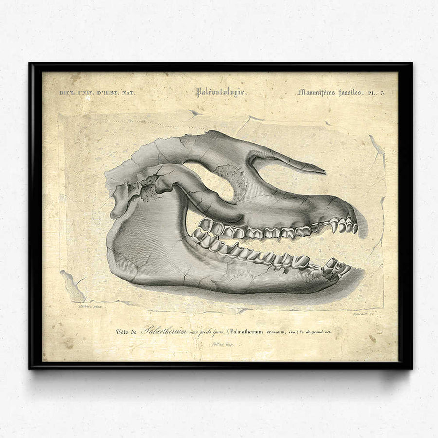 Dinosaur Fossil Vintage Print 1 (VP1007) 쇼핑- Orion Wells