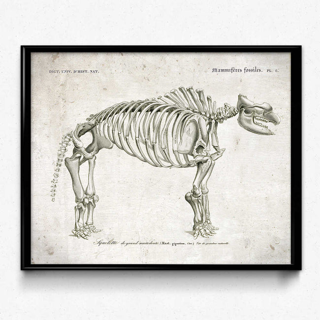 Shop for Dinosaur Fossil Vintage Print 2 (VP1009) - Orion Wells
