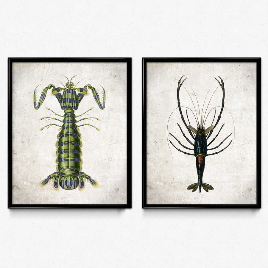 Shop for Freshwater and Saltwater Shrimp Set of 2 - Orion Wells