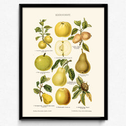 Shop for Apples and Pears Fruit Vintage Print - Orion Wells
